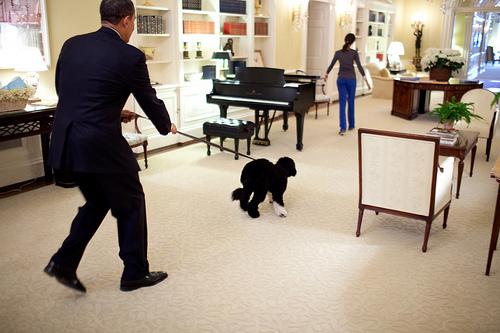 obama-and-bo.jpg