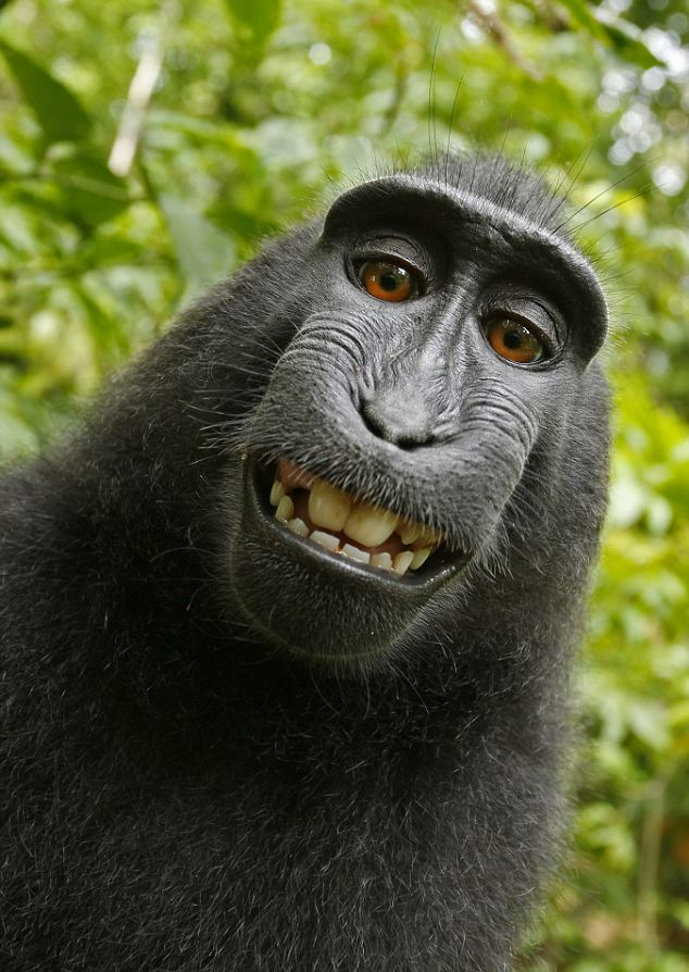 smiling macaque self-portrait.jpg
