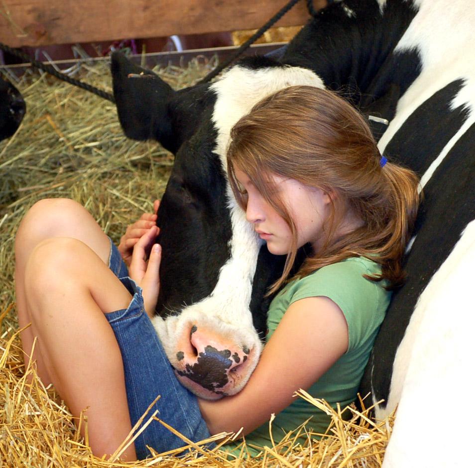 girl and cow sleeping.jpg