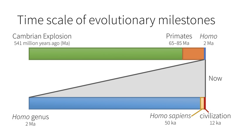 Time scale of evolutionary milestones
