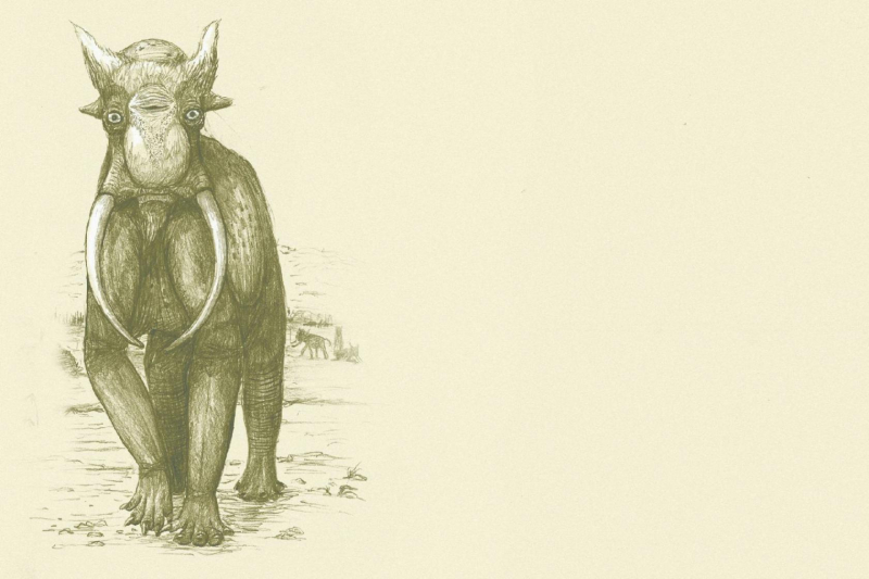 Elephant shrink wrapped